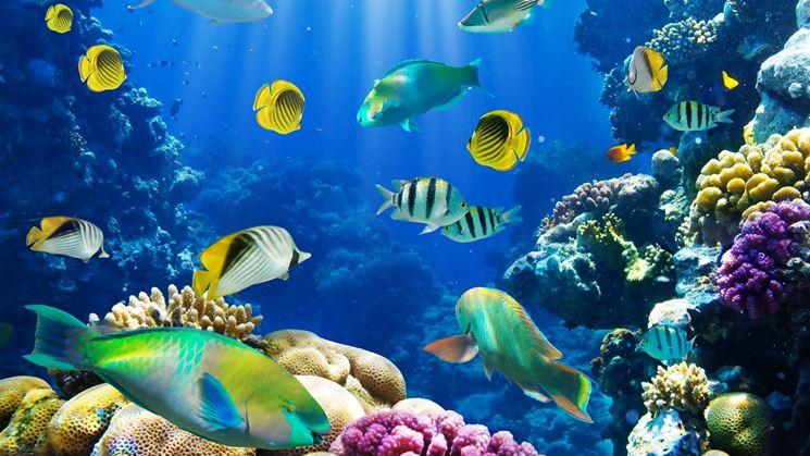 L 39 acquario come valore aggiunto per l 39 arredamento di casa for Acquario arredamento
